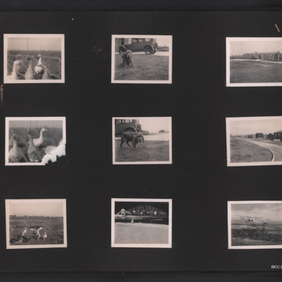 Geese, dog, buildings and Hawker Henley and DH.82B Queen Bee aircraft
